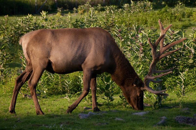 african safari Park-Canada-10.jpg