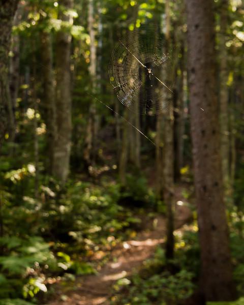 Premier sur le sentier mange des araignées