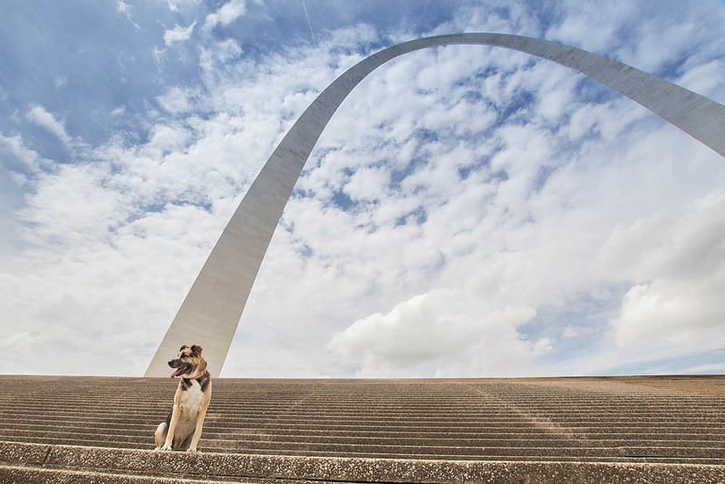 St-Louis-Dog-Photographer-22.jpg