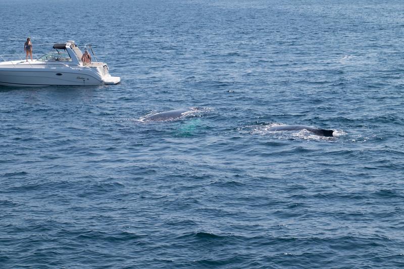 humpbacks-6281.jpg