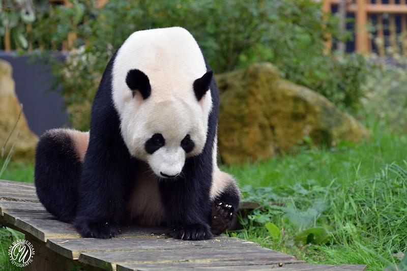 20180909 Ouwehands dierenpark GVW_8656.jpg