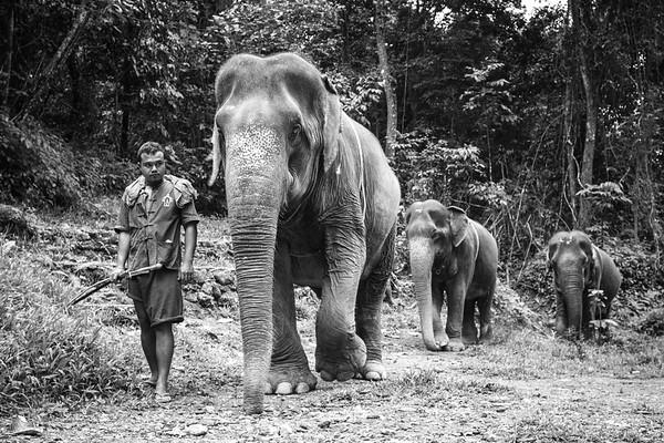 Elephant Edits-12
