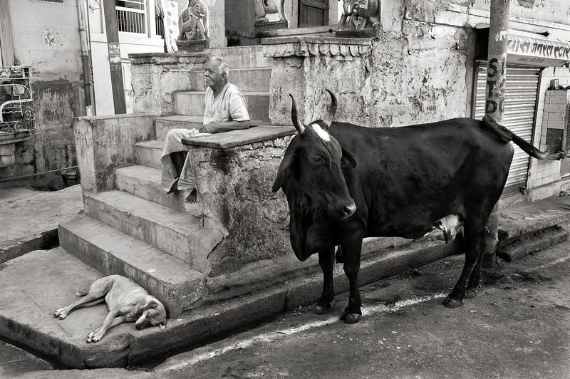 Street scene.  Udaipur,Rajasthan, India, 2011.