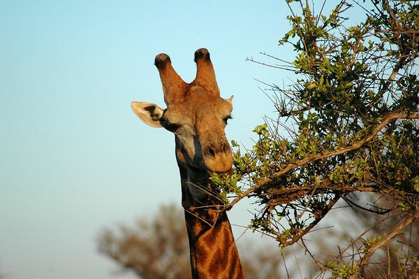 Kruger National Park - South Africa - 2008
