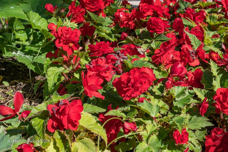 Don Egan's Flowers -116.jpg