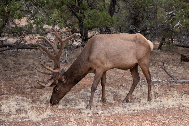 WVWS_Grand Canyon South Rim-5263.jpg