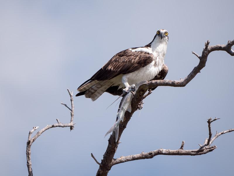Everglades-11.jpg