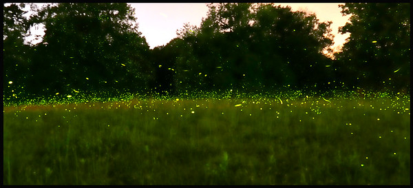Fog and Fireflies