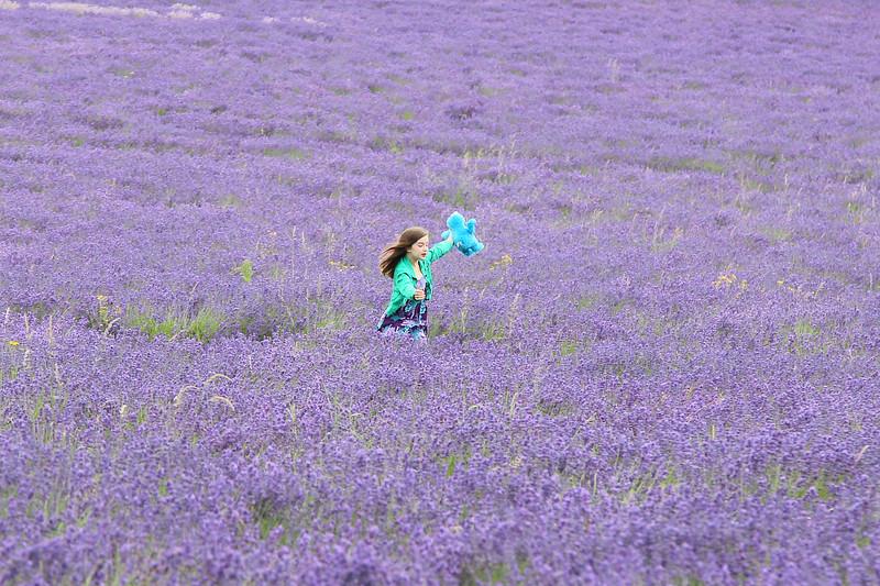 Banstead Lavender