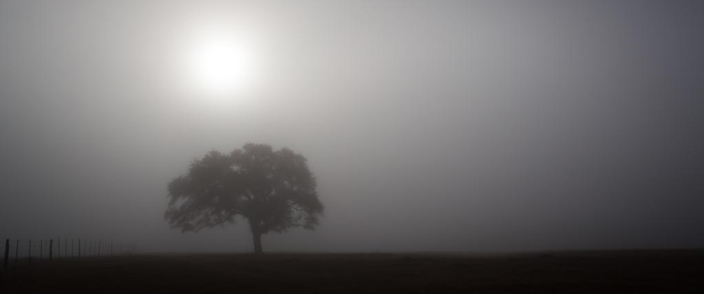 IMAGE: http://alfredomora.smugmug.com/Landscapes/General-Landscapes/i-QbcMqLz/0/XL/20120119-exploring%20the%20fog-003-proc-XL.jpg