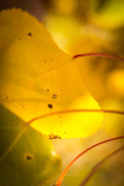 20151024-Fall Colors-27.jpg