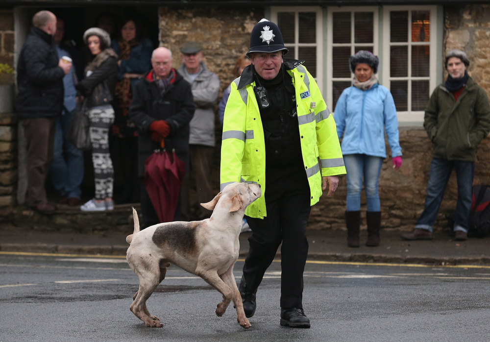 Description of . Police officer Neil Bamford directs a hound from the Avon Vale Hunt, that has run off from outside the Red Lion pub where supporters have gathered to watch their traditional Boxing Day hunt, on December 26, 2012 in Lacock, England. As hundreds of hunts met today, Environment Secretary Owen Paterson claimed that moves to repeal the ban on hunting with dogs in England and Wales may not happen in 2013, although he insisted it was still the government's intention to give MPs a free vote on lifting the ban.  (Photo by Matt Cardy/Getty Images)