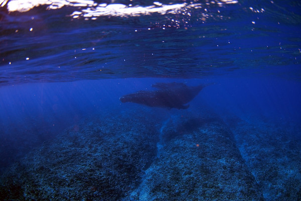 Humpback Whales and Moorea adventures