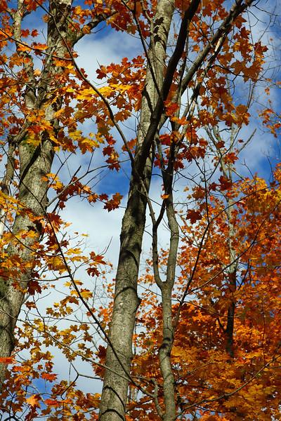 10th Line Trees 1.jpg