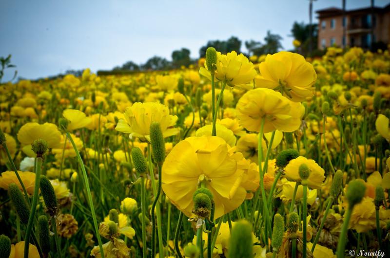130505_038_FlowerField.jpg