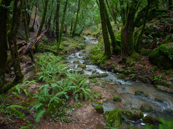 Skyline to Portola Redwoods