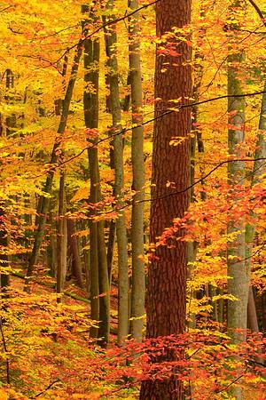 Autumn in Karlstal