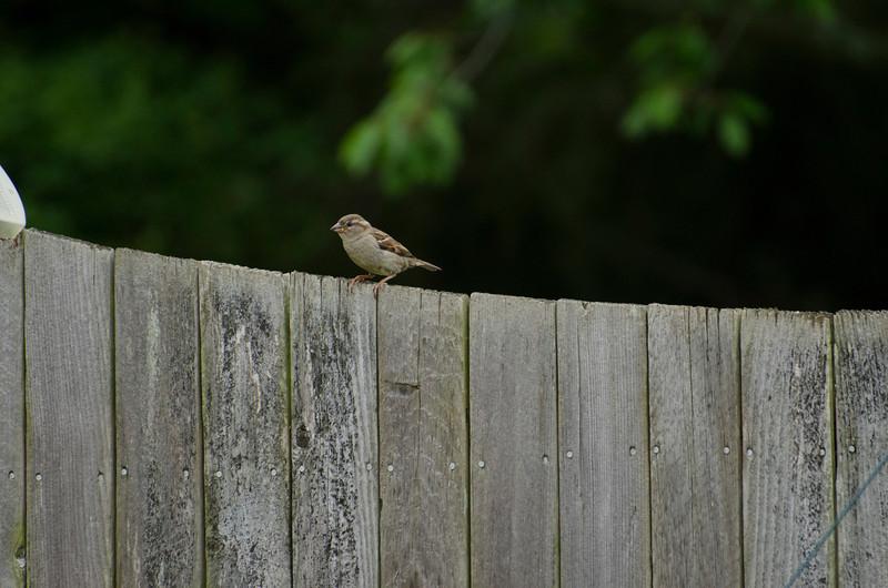 2013 Birds in the back yard_13.jpg