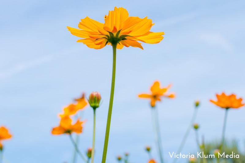 Dix_Park_Sunflower_Trip-4.jpg