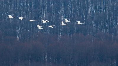 鸟类摄影预展览作品-2014