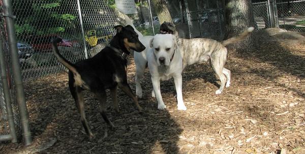 PICS JUNE 12::Gypsy, Jasper, Spencer