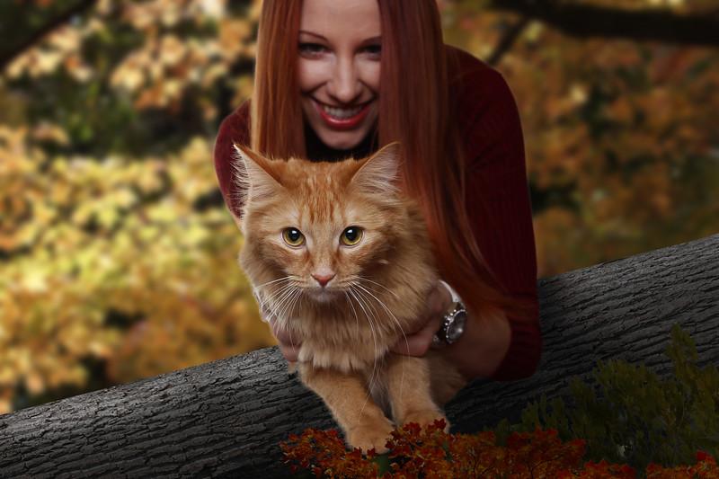 Orange-cat-6.jpg