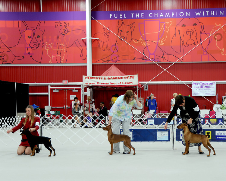 German Pinscher National 2011