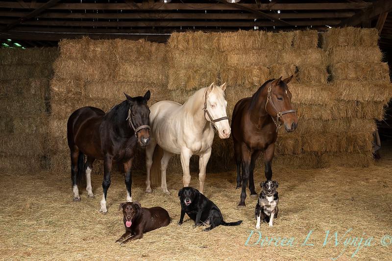Horse family portrait_108.jpg