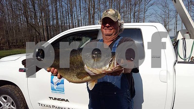 angler-catches-157pound-sharelunker-on-caddo-his-second-entry