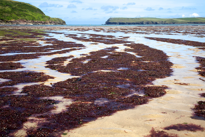 Wonderful seaweed patterns