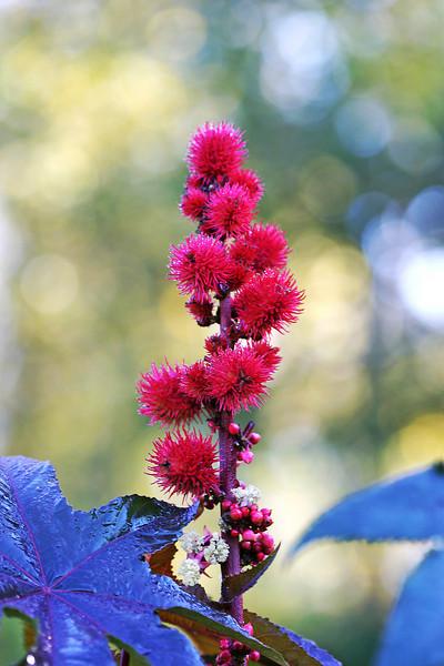 Flowerx.jpg