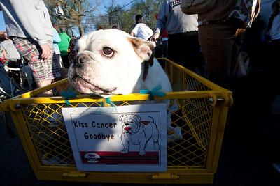 Dogswalk Against Cancer 2009