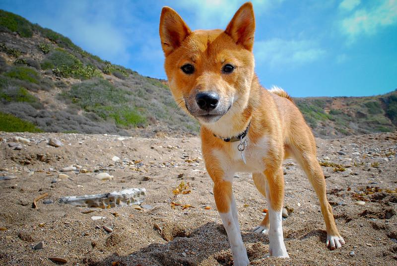 dogs_beach-085.jpg
