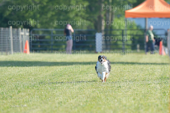 GCDOC Fast Cat June 2020
