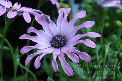 Stunning Flower Photos