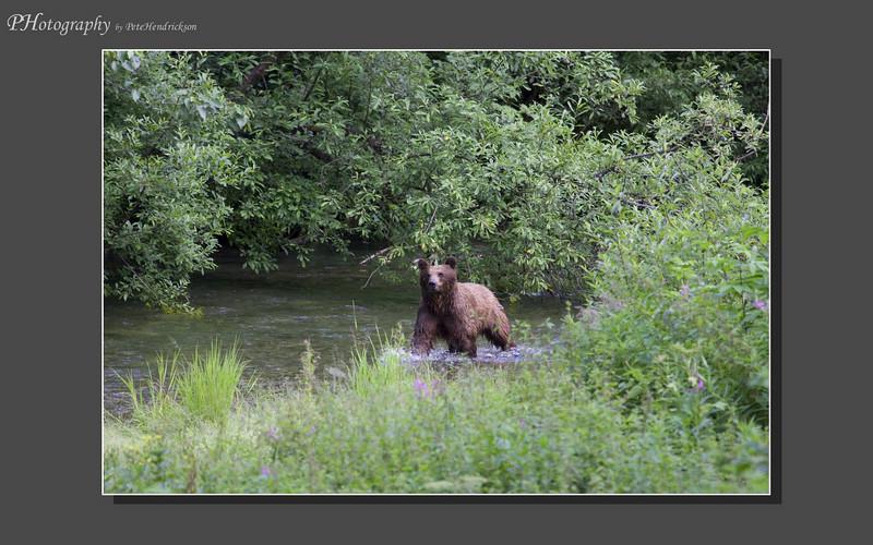 My Alaska 12-08-121.jpg