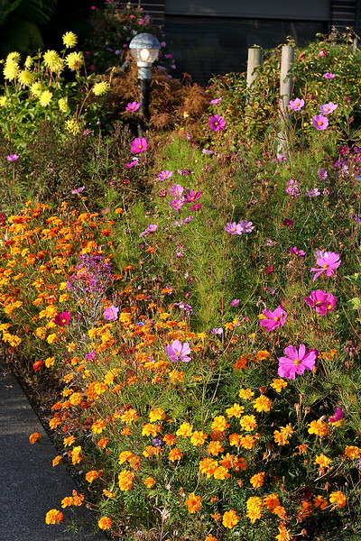 0015 Flowers outside Restaurant.jpg