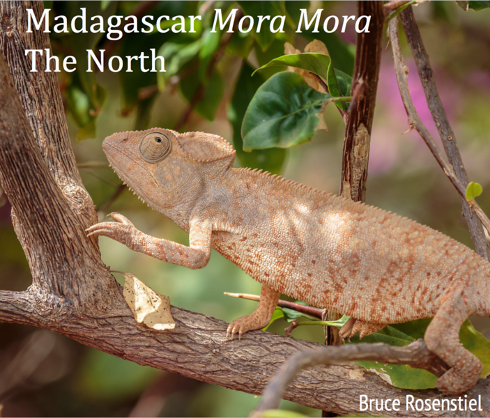 Madagascar North