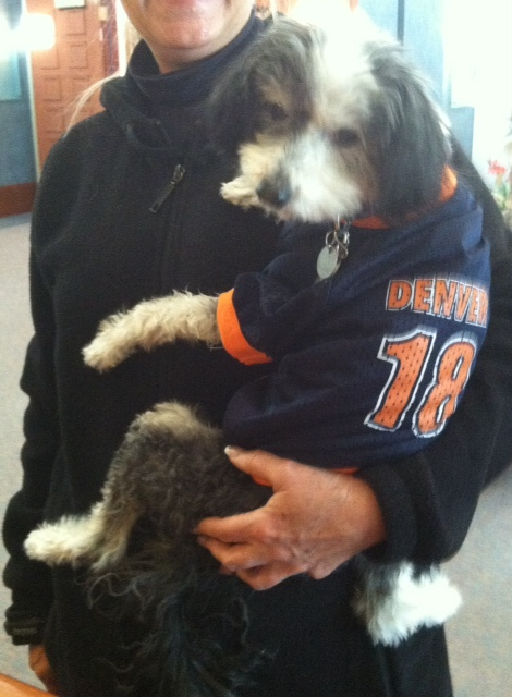 . Chinese Crested Powder Puff Super Fan BJ Pierce anxiously awaits Broncos next win to the Super Bowl