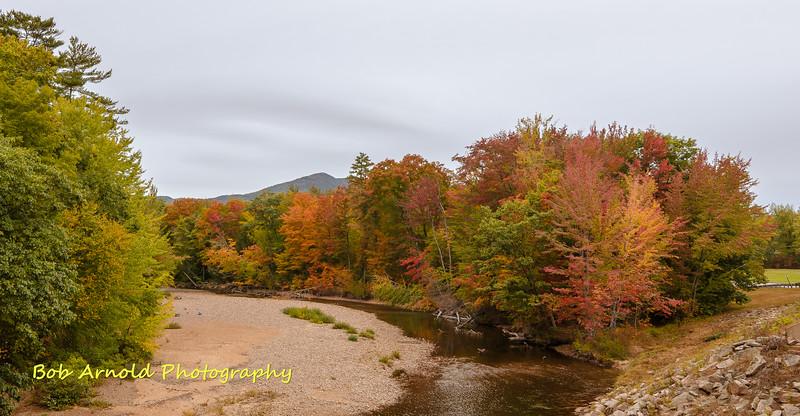 NH Foliage-2.jpg