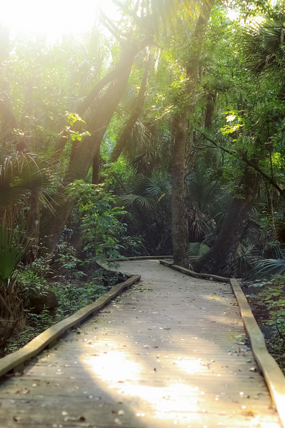 Boardwalk through a swamp