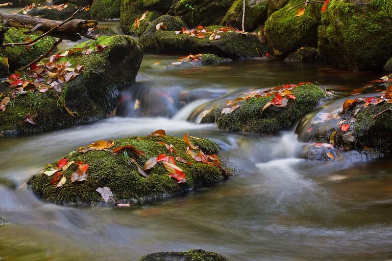 Fallen leaves litter the stream that runs alonside the Appalachian trail to Little Rock Pond.