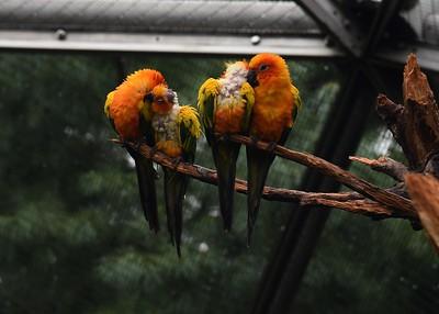 NY, Corona - Queens Zoo, 2017