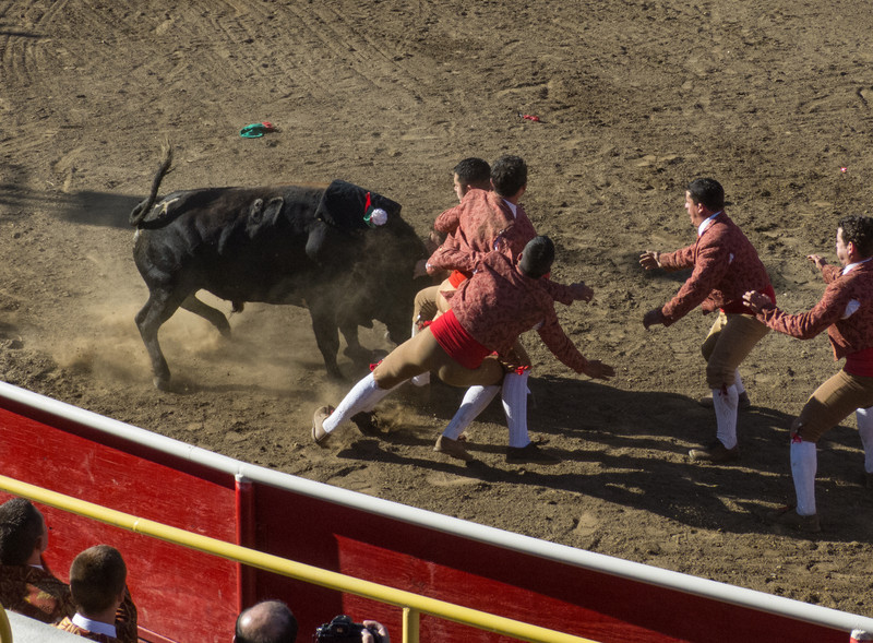 """High speed still sequence: (Next 2 photos) The Forcados got for a FOURTH try of """"pega de cara"""" with the same bull."""