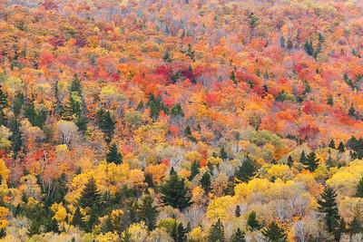 Pattern of Trees in Autumn.