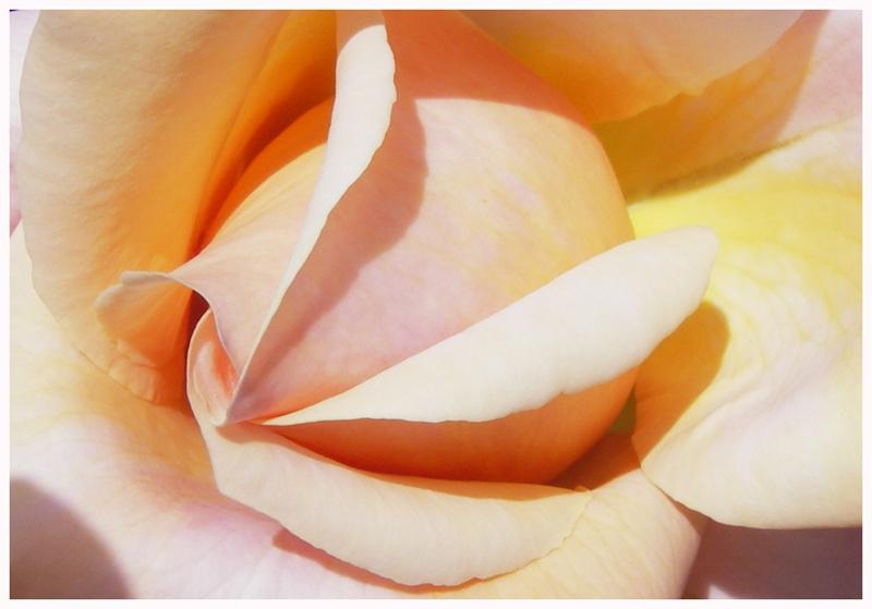FS 06-05 roseto Fineschi 039.jpg