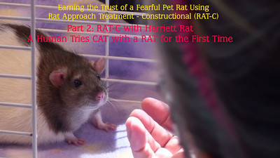 RAT-C Sessions with Harriett Rat
