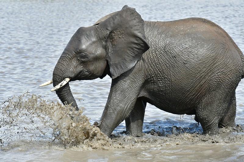 Elephants109.jpg