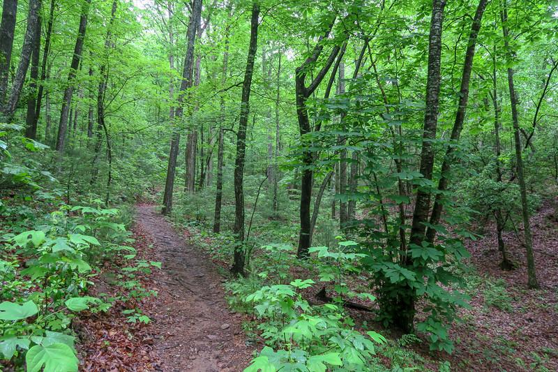 Explorer Loop Trail -- 2,530'