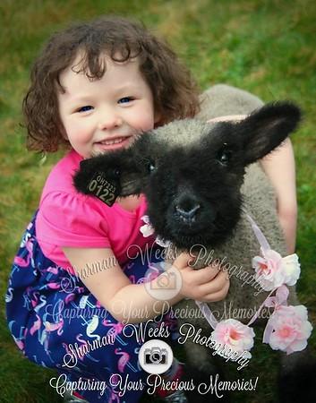 Easter Lamb Photos